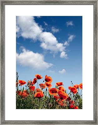 Poppy Flowers 04 Framed Print by Nailia Schwarz