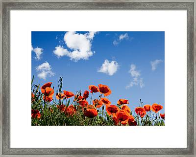 Poppy Flowers 05 Framed Print by Nailia Schwarz