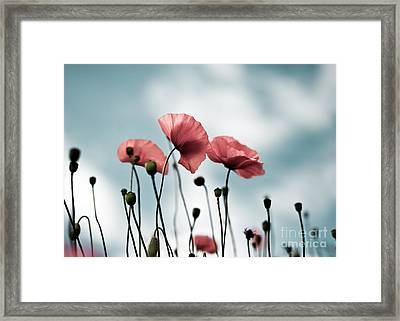 Poppy Flowers 07 Framed Print