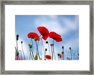 Poppy Flowers 08 Framed Print by Nailia Schwarz