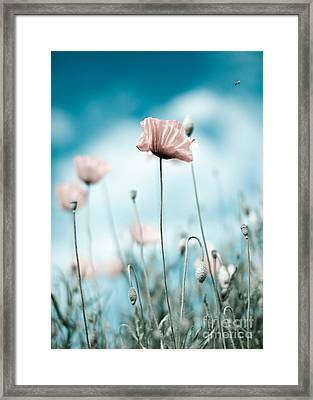 Poppy Flowers 10 Framed Print by Nailia Schwarz