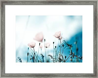 Poppy Flowers 11 Framed Print by Nailia Schwarz