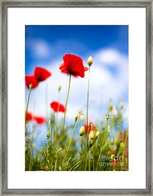 Poppy Flowers 12 Framed Print by Nailia Schwarz