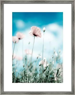 Poppy Flowers 13 Framed Print by Nailia Schwarz