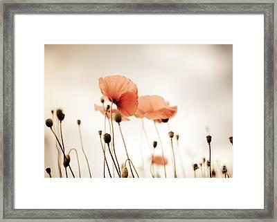 Poppy Flowers 14 Framed Print by Nailia Schwarz