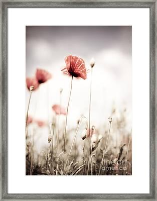 Poppy Flowers 15 Framed Print by Nailia Schwarz