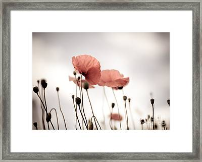 Poppy Flowers 16 Framed Print by Nailia Schwarz