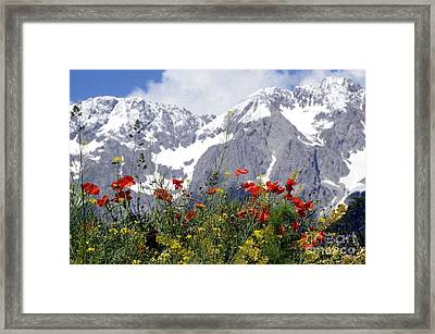 Poppy Flowers Under The Mountains Framed Print