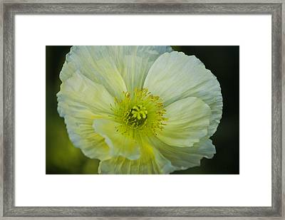 Poppy Night Out Framed Print