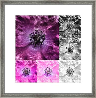 Poppy Purple - Macro Flowers Fine Art Photography Framed Print by Marianna Mills