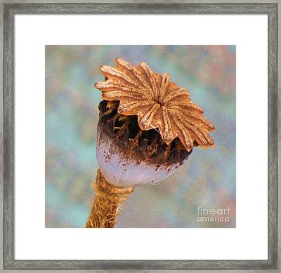 Framed Print featuring the photograph Poppy Seed Pod by Michele Penner