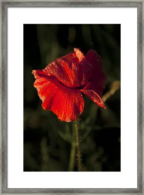 Poppy Framed Print by Svetlana Sewell