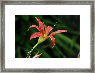 Framed Print featuring the photograph Popsicle Bloom by Lorraine Devon Wilke