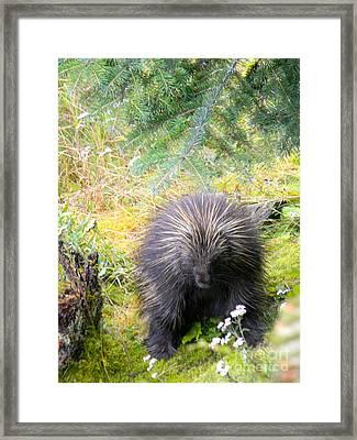 Porcupine Framed Print by Derek Swift
