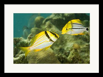 Bread And Butter Cay Framed Prints
