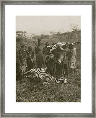 Porters Carry Off A Kill Of Two Zebras Framed Print