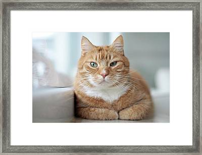 Portrait Cat Framed Print by Www.andreakamal.com