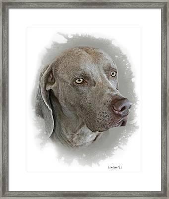 Portrait In Gray Framed Print