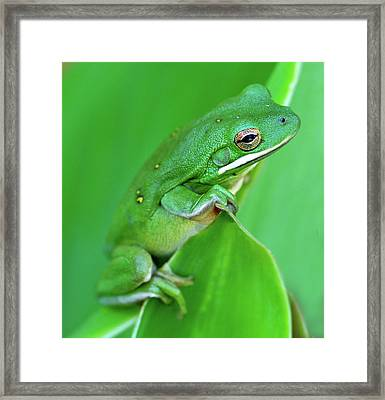 Portrait In Green Framed Print by Jeff R Clow