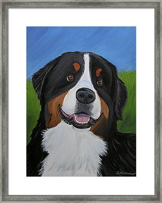 Portrait Of A Bernese Mountain Dog Framed Print