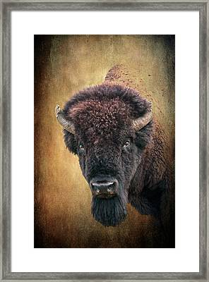 Portrait Of A Buffalo Framed Print by Tamyra Ayles