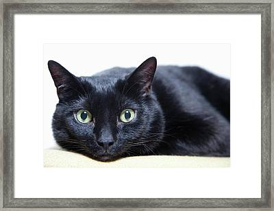 Portrait Of A Cat Framed Print by Sara Wight