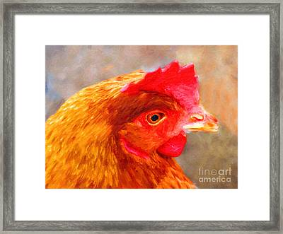Portrait Of A Chicken Framed Print by Wingsdomain Art and Photography