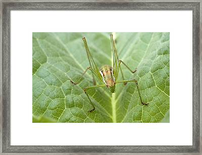 Portrait Of A  Cricket  Framed Print by Cliff Norton