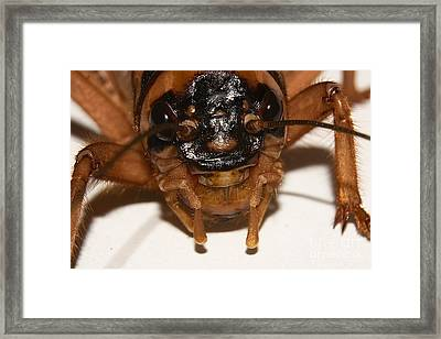 Portrait Of A Cricket Framed Print by Mareko Marciniak
