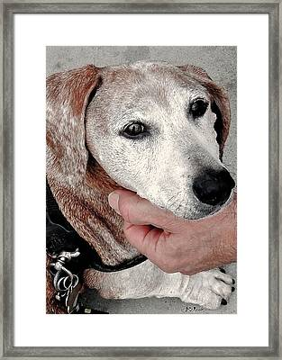Portrait Of A Dachshund Framed Print by Brian D Meredith