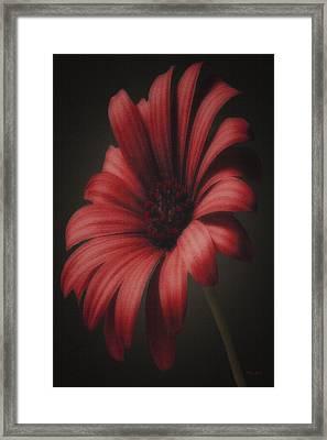 Portrait Of A Daisy Framed Print