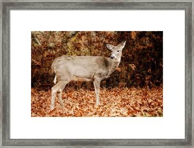 Portrait Of A Deer Framed Print by Kathy Jennings