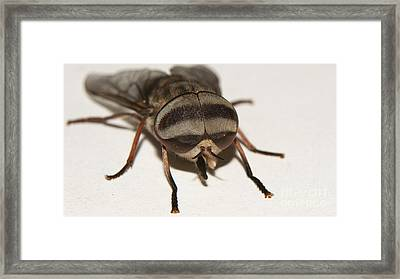 Portrait Of A Fly Framed Print