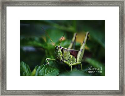 Portrait Of A Grasshopper Framed Print