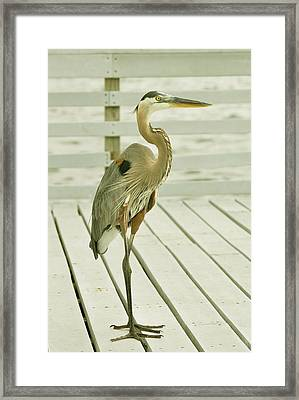 Portrait Of A Heron Framed Print by Rick Frost