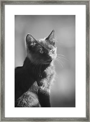 Portrait Of A Kitty Framed Print by Kim Henderson
