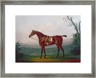 Portrait Of A Race Horse Framed Print by Daniel Clowes