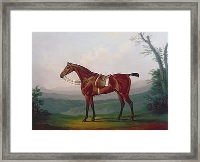 Portrait Of A Race Horse Framed Print