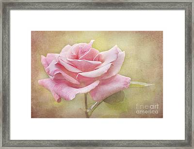 Portrait Of A Rose Framed Print by Cheryl Davis