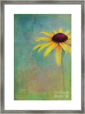 Portrait Of A Sunflower Framed Print by Judi Bagwell
