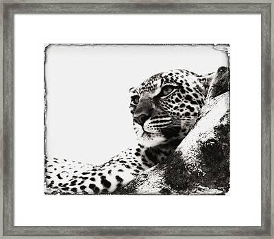 Portrait Of An African Leopard Framed Print by Carson Ganci