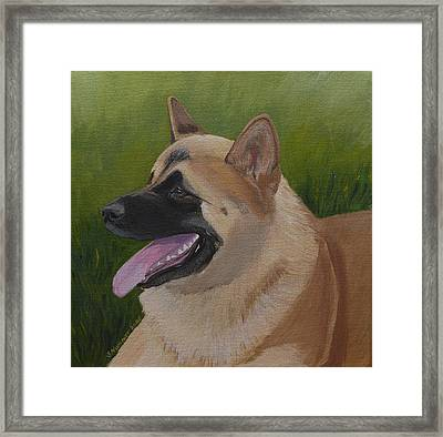 Portrait Of An Akita Framed Print by Sharon Nummer