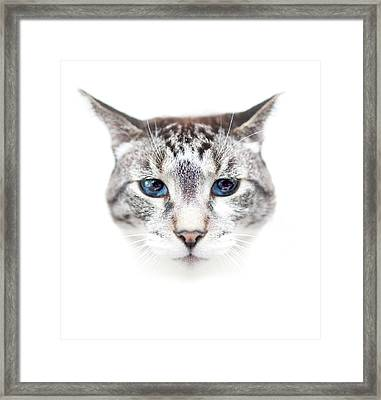 Portrait Of Cat Framed Print by by Jonathan Fife