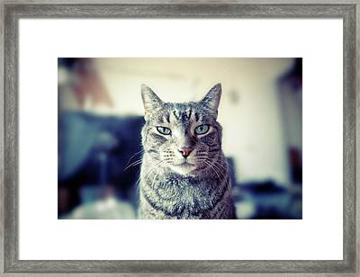 Portrait Of Cat Framed Print by William Andrew