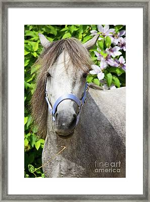 Portrait Of Lulu Framed Print by Angela Doelling AD DESIGN Photo and PhotoArt