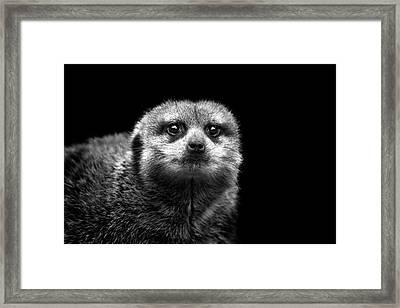 Portrait Of Meerkat Framed Print