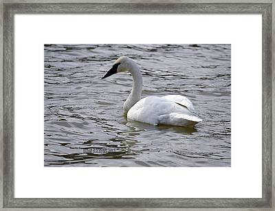 Framed Print featuring the photograph Poser by Brian Stevens