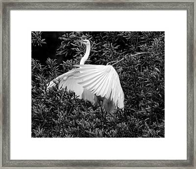 Posing At The Rookery Framed Print by Phill Doherty