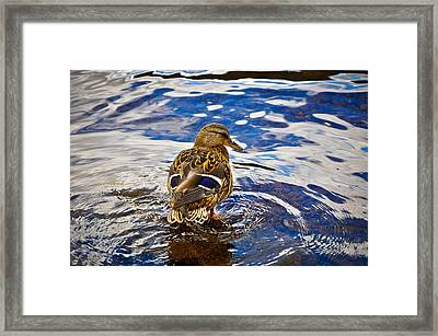 Posing Duck Framed Print by Erica McLellan