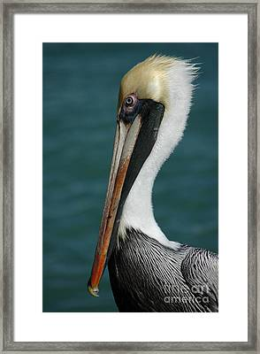 Framed Print featuring the photograph Posing For The Tourists by Vivian Christopher